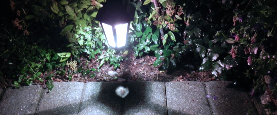 outdoor garden lighting Wyckoff